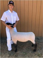2020 Solano Jr Livestock Booster Auction