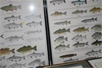 3 FRAMED FISH CHARTS