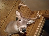 Whitetail Buck Taxidermy #2