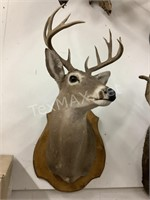 11 Point White Tail Shoulder Mount