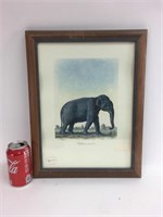 Frederic Cuvier Animals of Africa Elephant Print