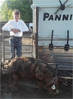 Franklin County IL Online Youth Livestock Auction
