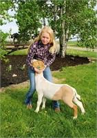 Teton County 4-H Livestock Auction