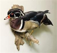 Duck Mounted on Wood