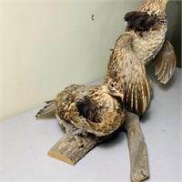 2 Grouse mounted on a Log, nice