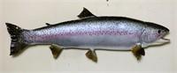 "Salmon Mount, 30"" Long, Nice!"