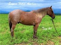 July 10th Eugene Horse Auction