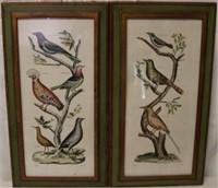 Pair Denis Diderot bird engravings