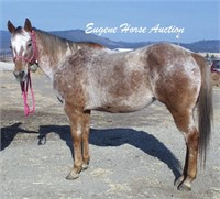 July 10th Eugene Horse Auction