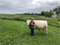 Sauk County Livestock Scramble Auction