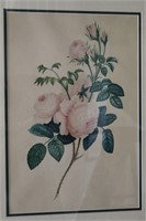 19th Century Botanical Study of Roses