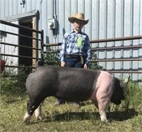 Marias Fair 4-H Livestock Auction