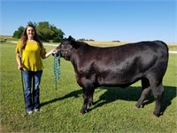 Montgomery County Youth Livestock Auction