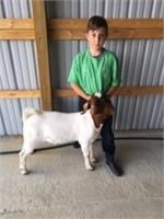 Schuylkill County 4H Livestock Auction