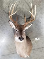 7/25/2020 - Taxidermy & Hunting Supply Auction