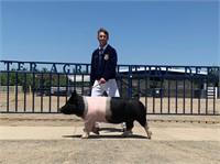 Yuba-Sutter Fair Jr Livestock Auction