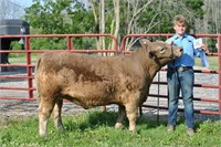 NIAGARA CO 4-H  AUCTION FOR STEERS, HOGS, LAMBS & GOATS