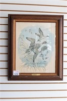 Pintail Picture Signed by Artist