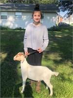 Graciella Kist Goat Project