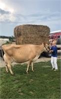 Kyle Clanton Dairy Project