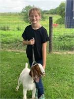 Ella Kleiner Goat Project