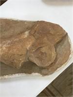 Large prehistoric fossilized crocodile bone,