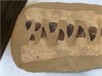 Prehistoric crocodile fossilized teeth, approx
