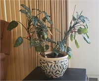House Plant and Planter