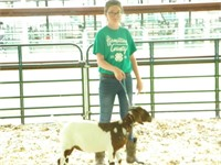Hamilton County Fair Livestock Auction 2020