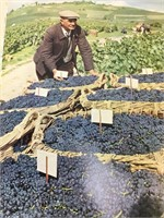 The Noble Grapes and the Great Wines of France