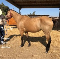 August 14th Eugene Horse Auction