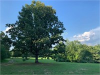 Court-Ordered Estate - 7 +/- acres & house - Old Cox Pike, B