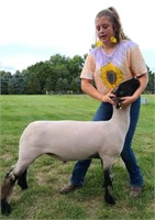 Live Virtual Lake County 4-H Livestock Auction