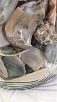 Glass Jar filled with Sea Shells