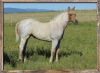 LAUING MILL IRON L RANCH QUARTER HORSE PRODUCTION SALE