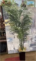 793 - BEAUTIFUL TALL NEVERDIE PALM TREE
