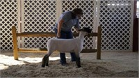 2020 Dutchess County 4-H Market Animal Online Auction