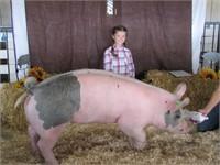 Ravalli County 4-H/ FFA Livestock Auction