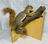 Squirrel Mounted on log