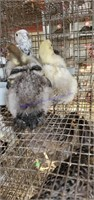 Small Animal & Exhibition Stock Online Auction 9-11-20