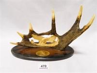 Antler w/Carved Eagle Display