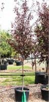 10/5 Garden House Nursery  Enid OK