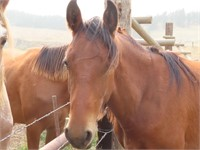Sweet Grass Ranch Horse Liquidation & Retirement Auction
