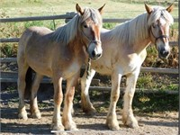 Fall 2020 Horse Sale