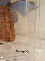 815 - ART: BUTTERFLIES IN ACRYLIC
