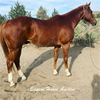 October 9th Horse Auction