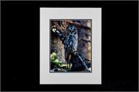 Priest, Bill Bear, Owl Matte Photo Collection