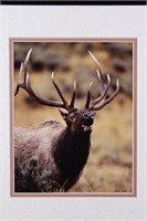 Priest, Bill Bison, Elk & Racoon Matte Photography