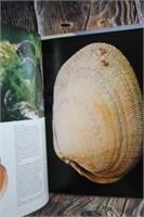 Great Lot of Sea Shells Art & Books