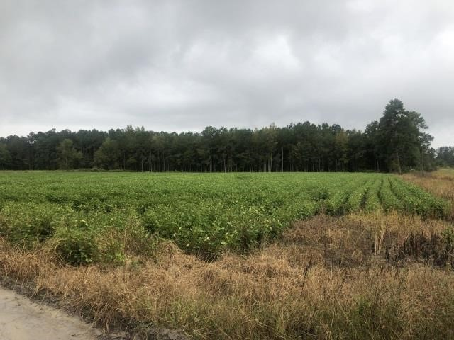 +/- 16 ACRES OFF MILES MOODY RD., MULLINS SC
